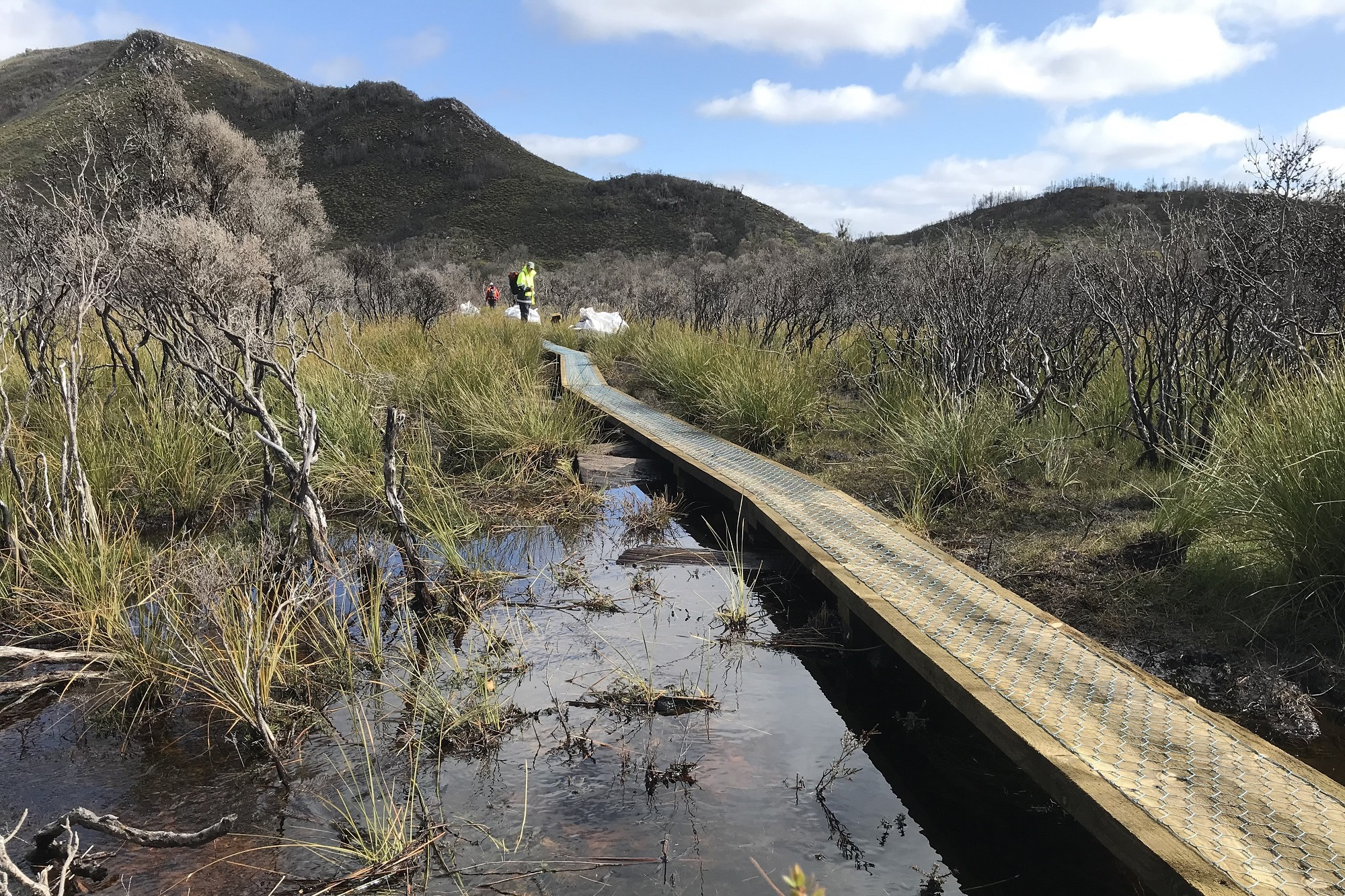 New track work through fire damaged area on the Lake Judd Track