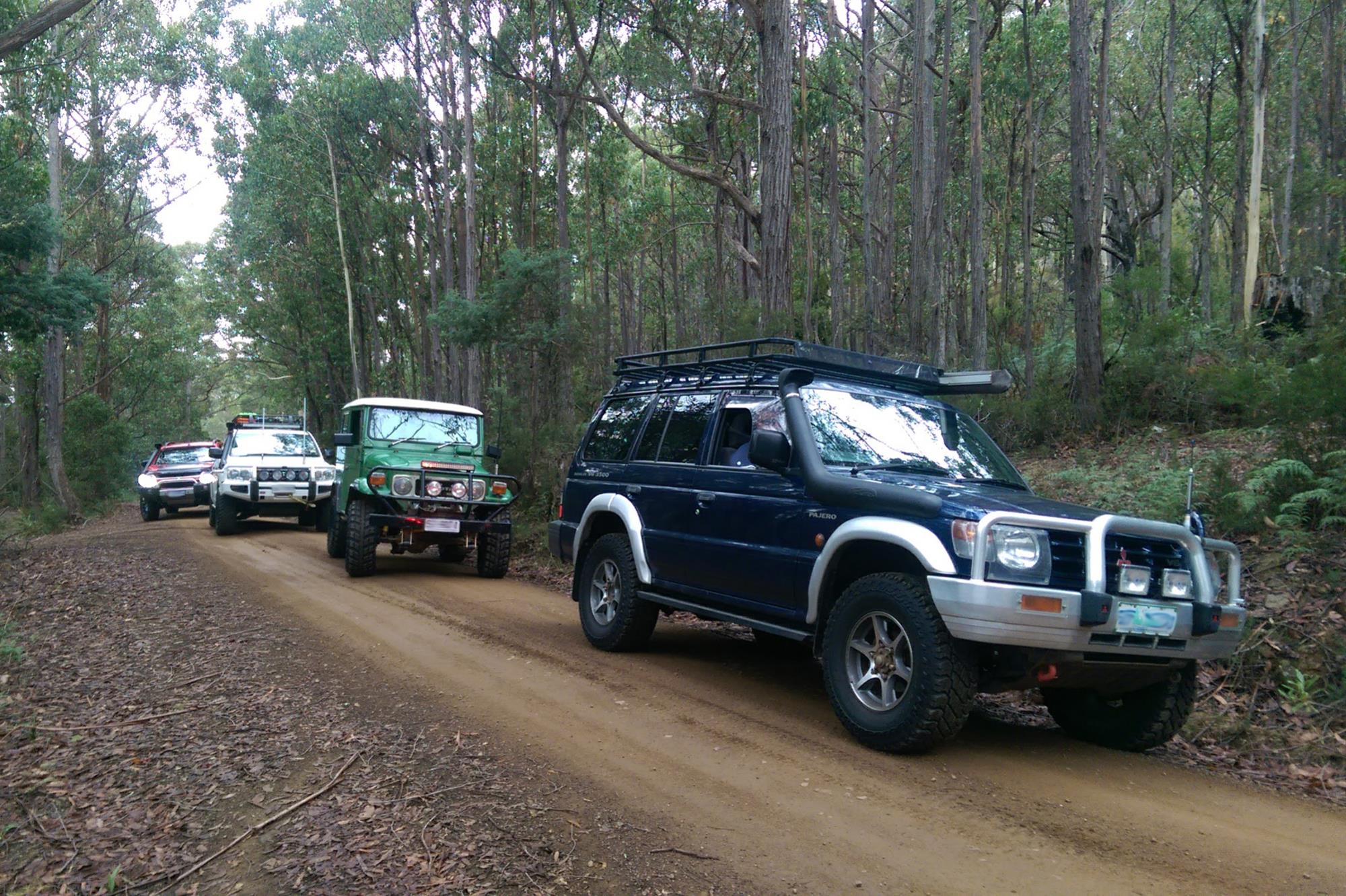 A convoy of recreational 4WD vehicles sriving through tall forest on the Jefferys Track