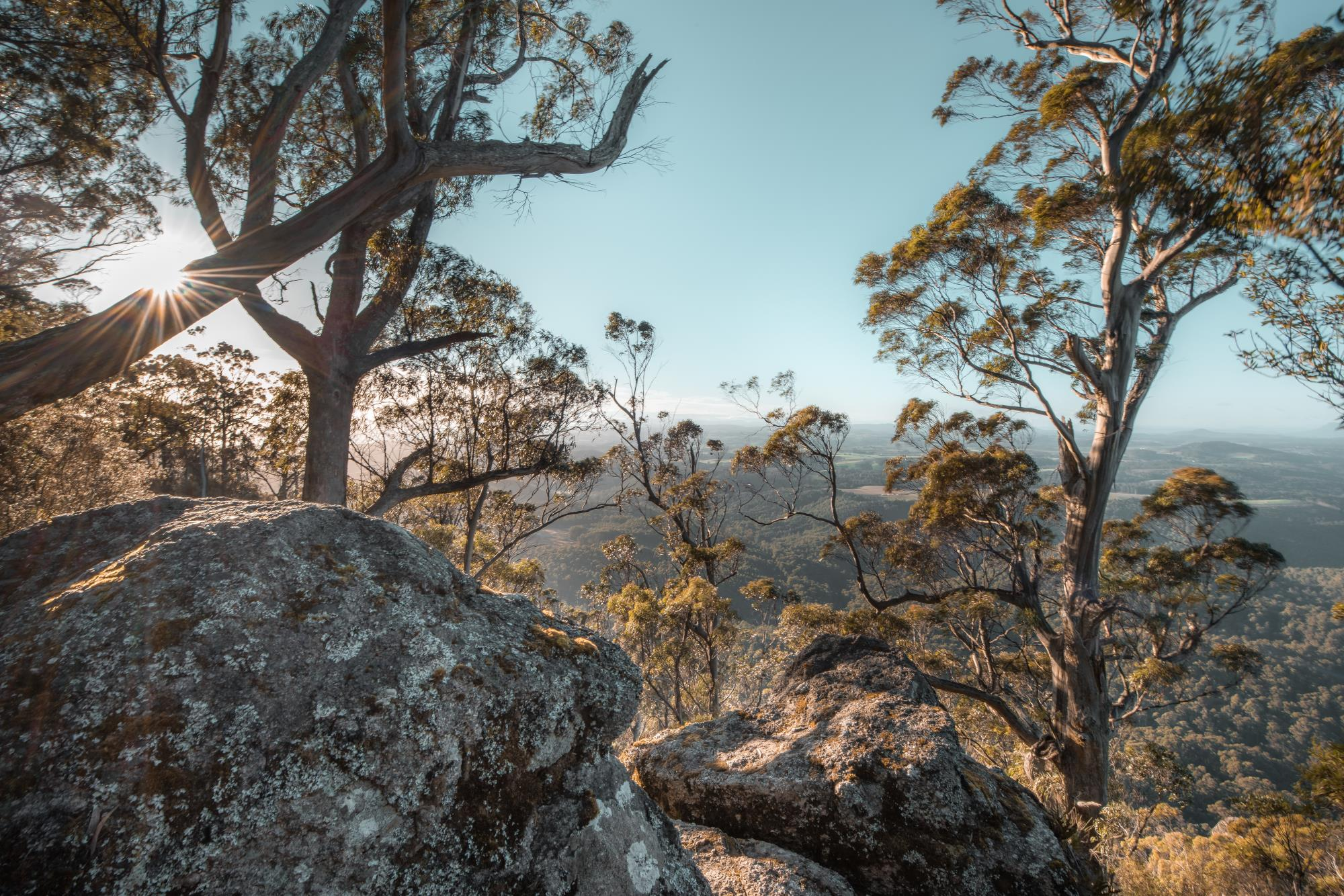 Eucalypts and rocks view from Mt Dial