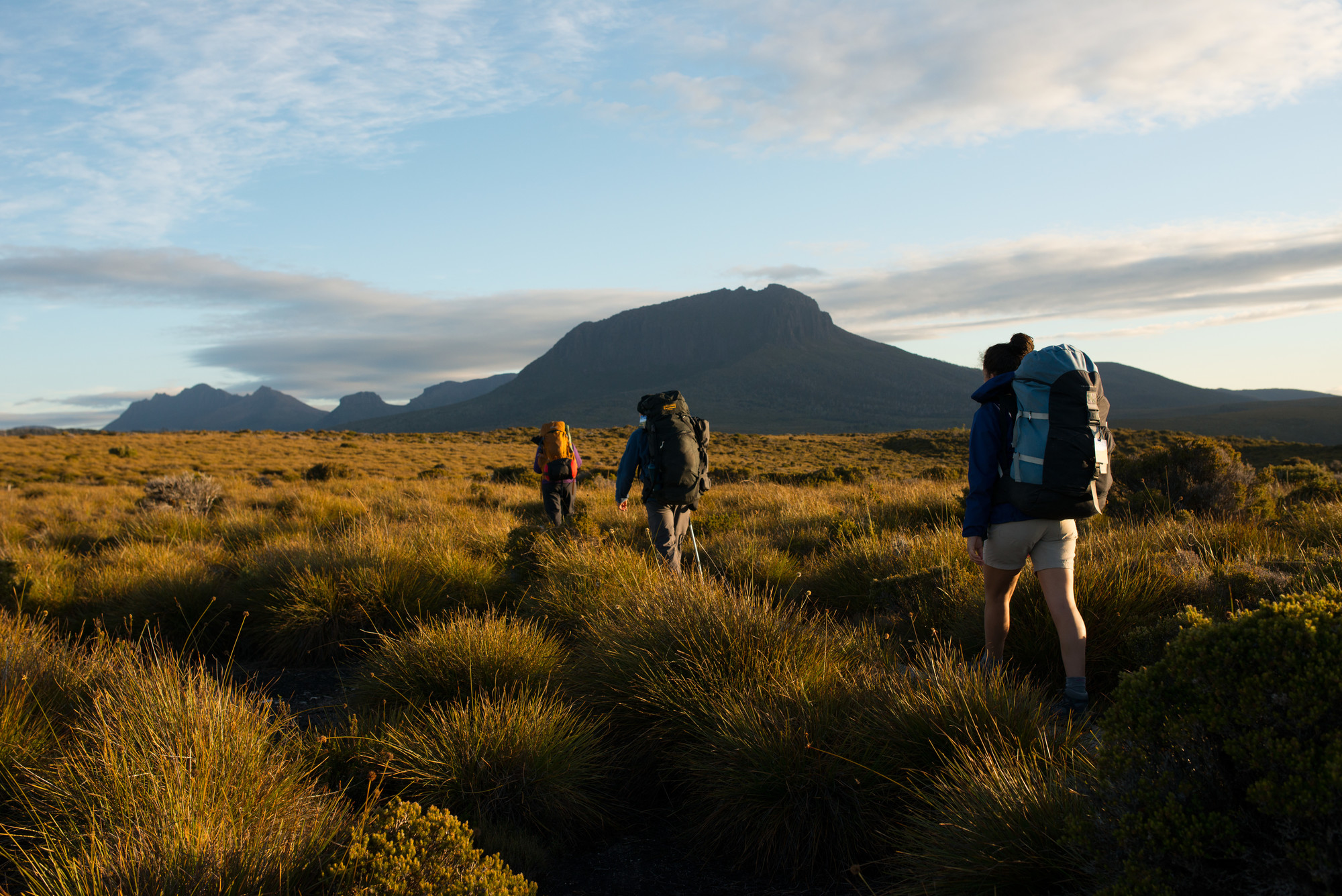 Well-equipped walkers, walking through buttongrass plain on the Overland Track in Summer