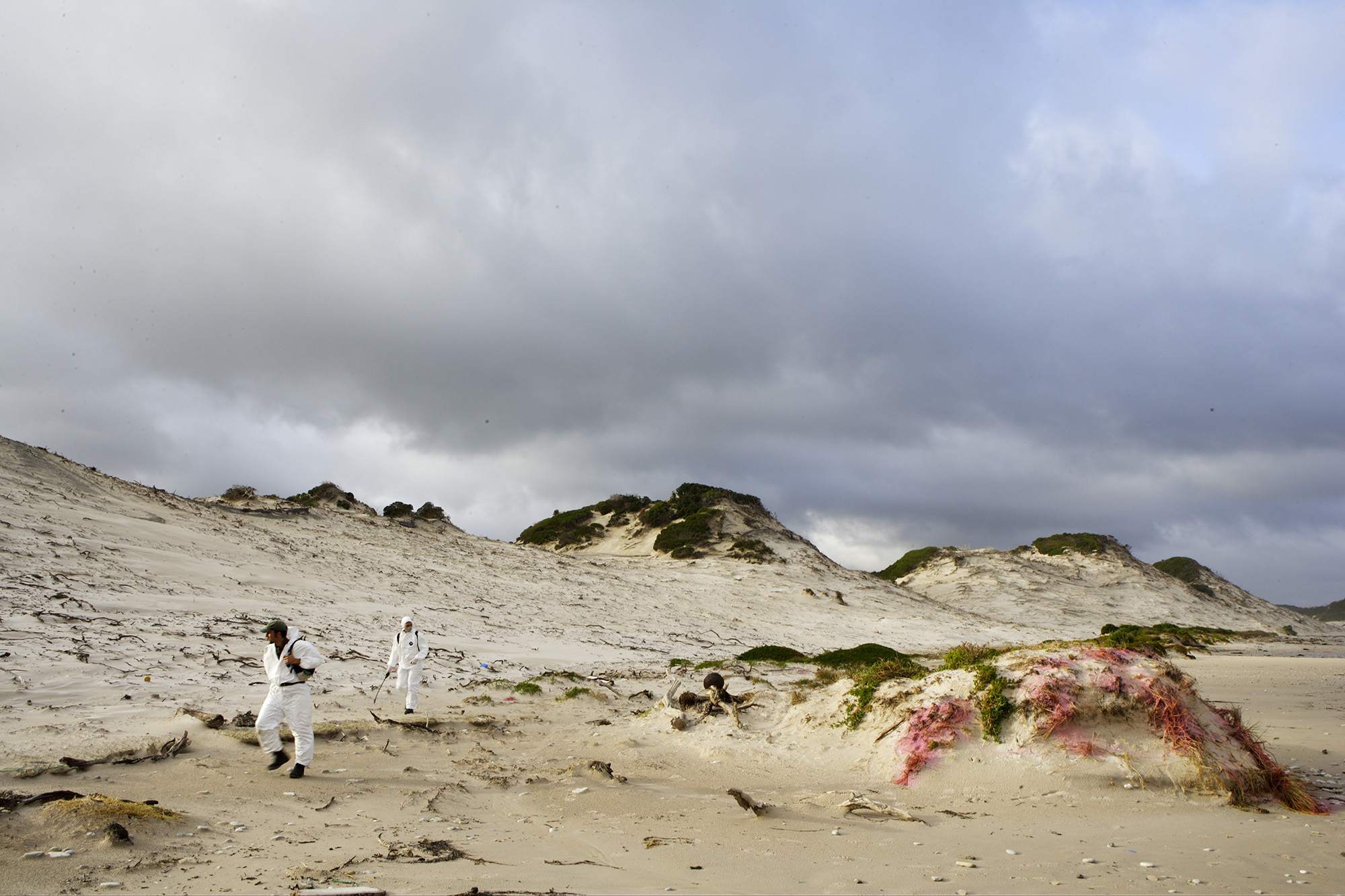 Workers dressed in coveralls apply weed killer to vegetation in the sand dunes on the South Coast Track