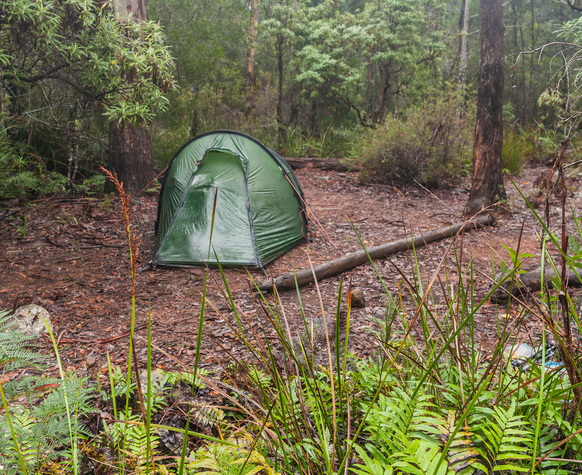 Tent pitched in a bush camp in the Douglas-Apsley National Park