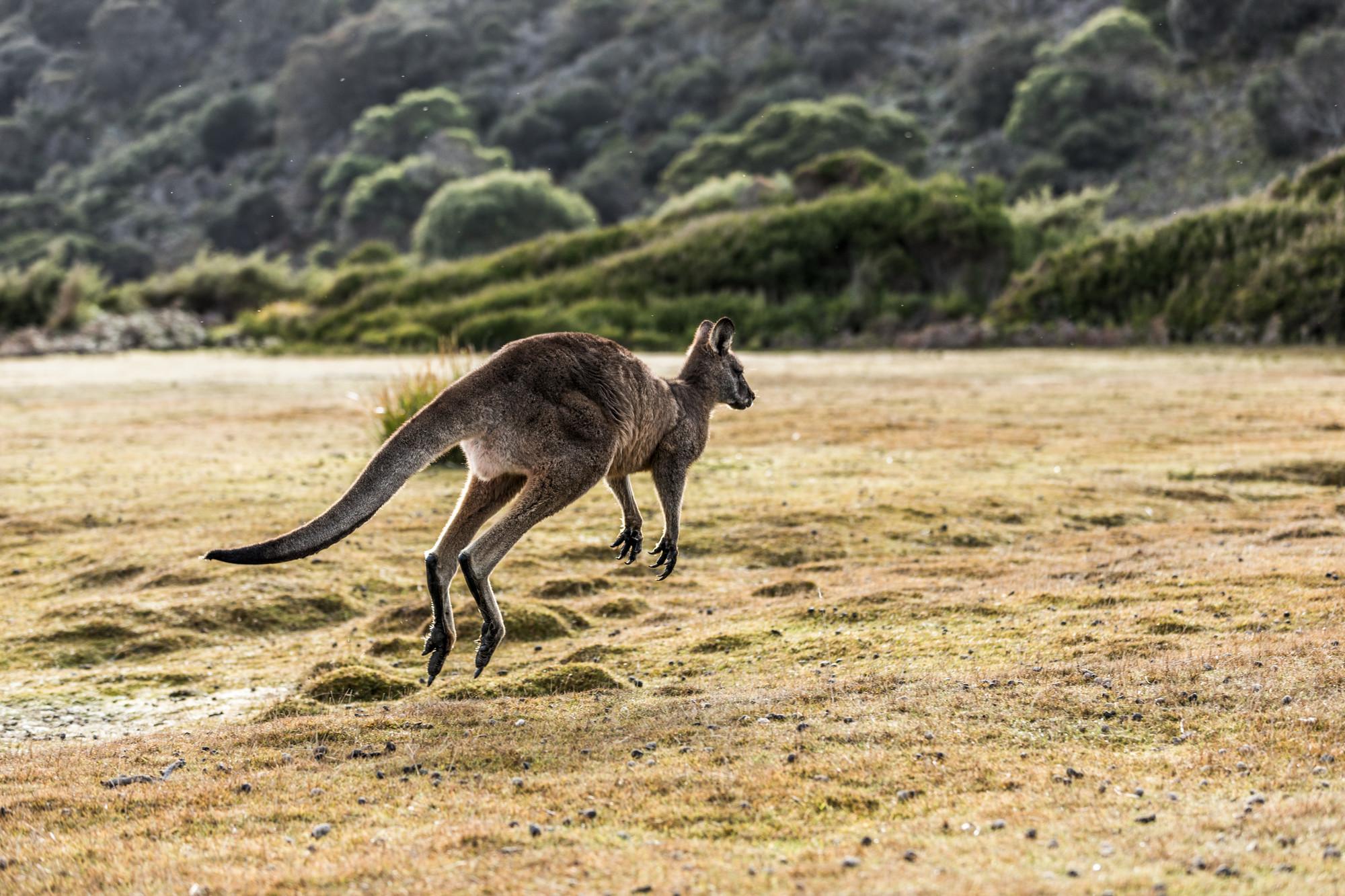 Land Mammals Parks Wildlife Service Tasmania